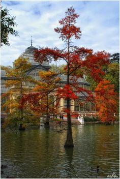 Otoño en Madrid, Palacio de Cristal en el Parque del Retiro