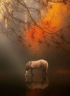 Autumn Mist by Jenny Woodward