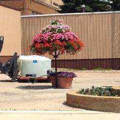 Metal flower pot tree!