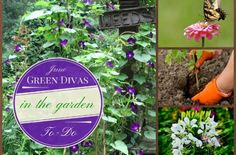 The Green Divas: low-stress ways to live a deeper shade of green.