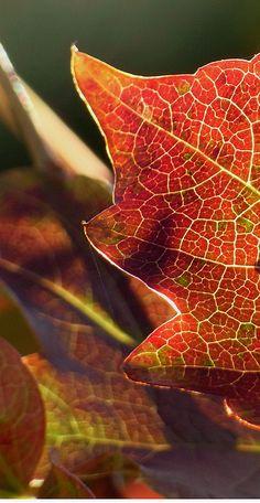 Lacy leaf patterns