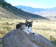 Traveling With Cats in RV or Car