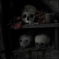 flower by Incognita Nom de Plume, via Flickr  Skulls in the Fontanelle Cemetery Caves, Naples, Italy