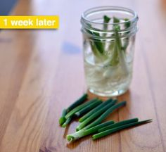Re-Growing Green Onions: Grow Your Scallions Back on Your Windowsill