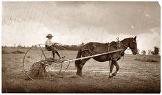Shorpy Historical Photo Archive :: Jack on Hay Rake: 1915