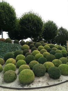 Boxwood Topiary Spheres