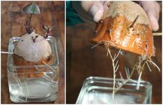 How To: Plant Sweet Potatoes Indoors