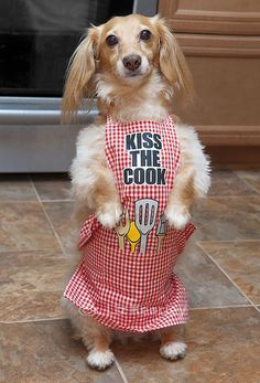 Kiss the cook!  - Dachshund in apron