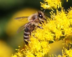 National Honey Bee Day Campaign. Save the bee and save the world.