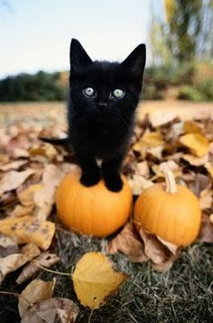 We can feel the temperatures getting colder! Love this autumn cat.