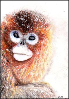 Golden Monkey by ~hellknite on deviantART