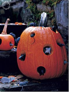 eek!  mice! more pumpkin fun