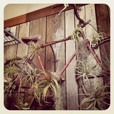 flora grubb, outdoor space, display idea, plant display, air plant