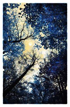#tree art, #art, #fine art photography, #Signore, #China blue, Delft blue, tree art, blue decor, navy blue, moon art,11x17, Original, Fine Art photograph, full moon, nature decor, art on Etsy, $82.00