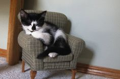 Cat in her little cat chair.