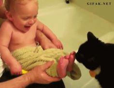 ..Cat  gif..