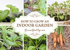 Grow and indoor gard