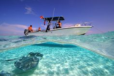 Stingray City, The Grand Cayman Islands photo via...