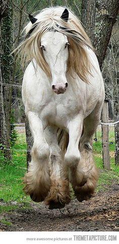 Marvelous Horse…Gypsy Vanner
