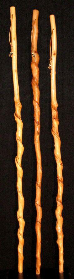 Curled Kentucky Walking Sticks