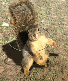 pelosi squirrel