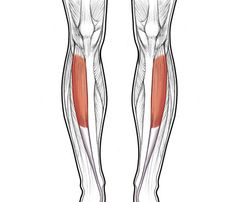 Strengthen these suckers and you'll create that sexy line of definition in your lower legs. And, being strong is also pretty great for injury prevention—no shin splints or ankle problems.