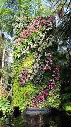 Orchids yeah like this will happen in the backyard anytime soon....