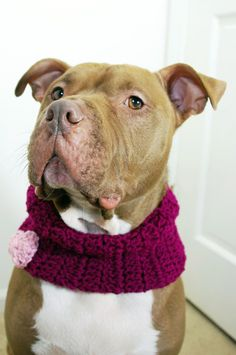 Dog Cowl Purple with Pink Heart Crochet ...not sure if my pup would wear this!