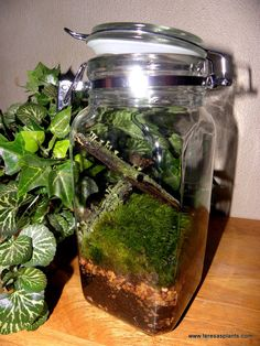 Forest Lichen logs  Woodland terrarium  Mood moss by teresab123,