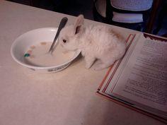animal pics, bookmark, heart, drinking, rabbits, breakfast, milk, baby bunnies, cereals