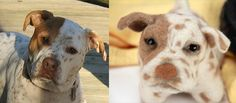 Send in a pic of your dog and you will get a stuffed animal that looks just like it! Oh.my.gosh. I want one!