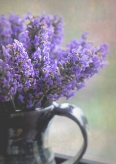Lavender On A Window Sill