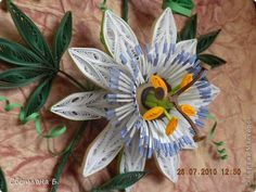 Quilled White Passion Flower - by: a Russian Artist