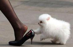 'Heel' via xinhuanet #Photography #Dog