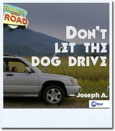 Dogs make great passengers; not so great drivers. #rule #road #drive #onstar