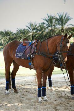 ralph lauren, intern ladi, ladi polo, polo horse, polo tournament