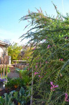 My Spring Garden in Winter
