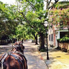 Historic Charleston Carriage Ride