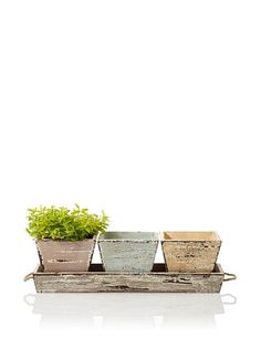 Wald Imports Vintage-Look Wood Planters & Tray Set, Assorted Pastels at MYHABIT