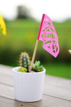 Baby cactus with a miniature flag.