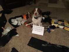 Dog Shame | I tried to do laundry and take out the garbage..