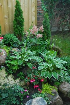 Small shade garden, Astilbes, fuchsias, hostas, creeping jenny....what is the tall cylindrical evergreen in the back???
