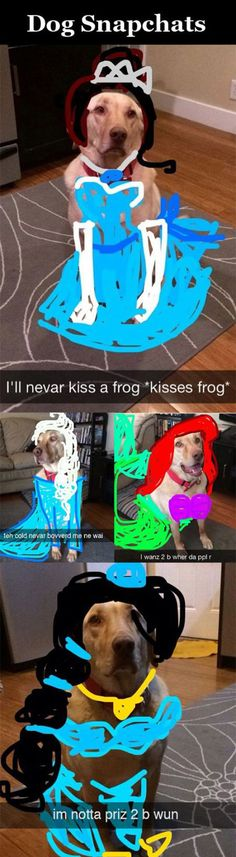disney princesses, disney princess snapchat, dog