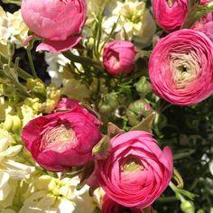 Vibrant pink ranunculus