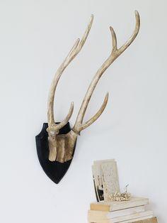 Decorative Deer Antlers | Cox & Cox