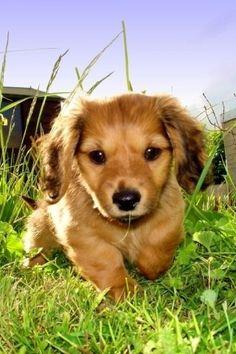 puppies, anim, dogs, pet, doggi