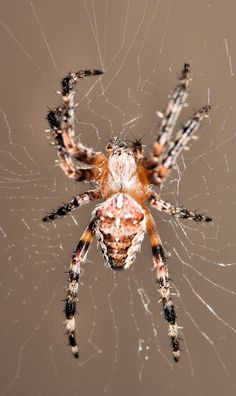 Spiders are not insects. URL: http://wolfspider.org/