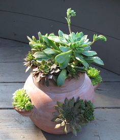 Succulent Plants in a Strawberry Pot