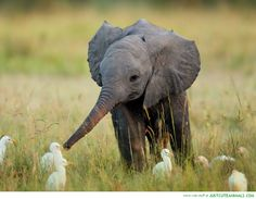 Cute Baby Elephants | awesomely-amazing-cute-baby-animals-elephant-pictures-cute-pics.jpg