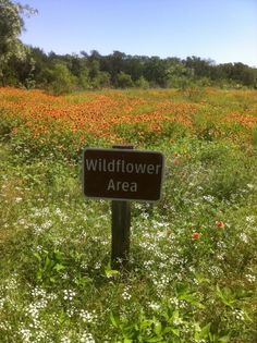 Wildflowers along Furneaux Creek Blue Trail - Carrollton, Texas